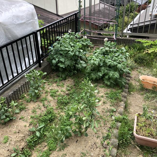 資本主義的生活に疲れた?それなら家庭菜園をやった方が良い理由!